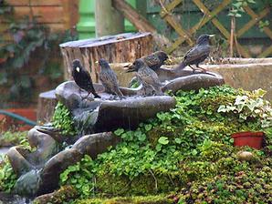 Stensund-Birds.png