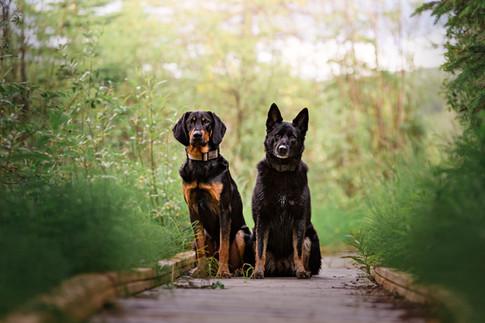 Tiffany Wilson Pet Photography Zoey & Ba