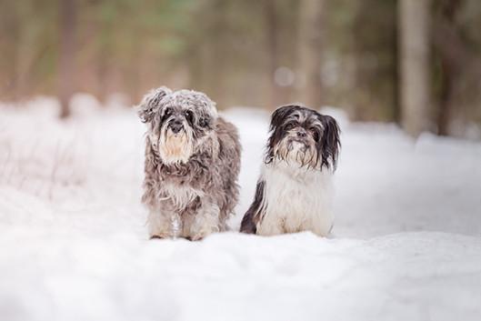 Tiffany Wilson Pet Photography Sammy & M