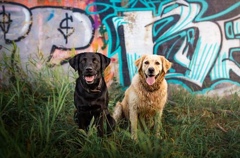 Tiffany Wilson Pet Photography Bentley &