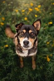 Tiffany Wilson Pet Photography Hunter-1.