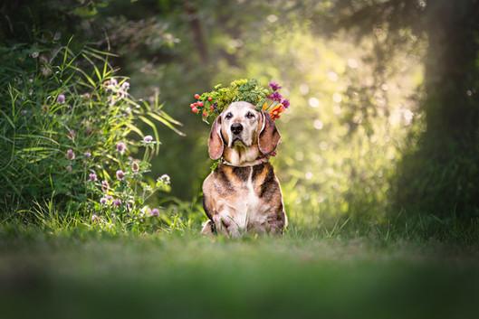 Tiffany Wilson Pet Photography Daisy-1.j