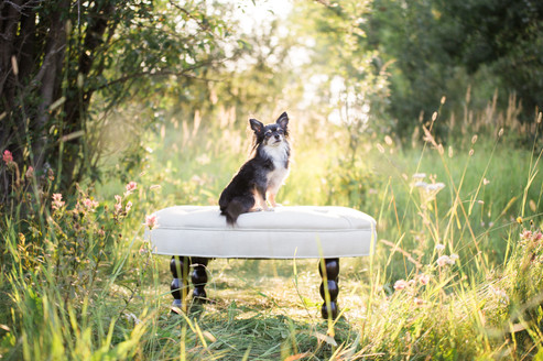 Tiffany Wilson Pet Photography