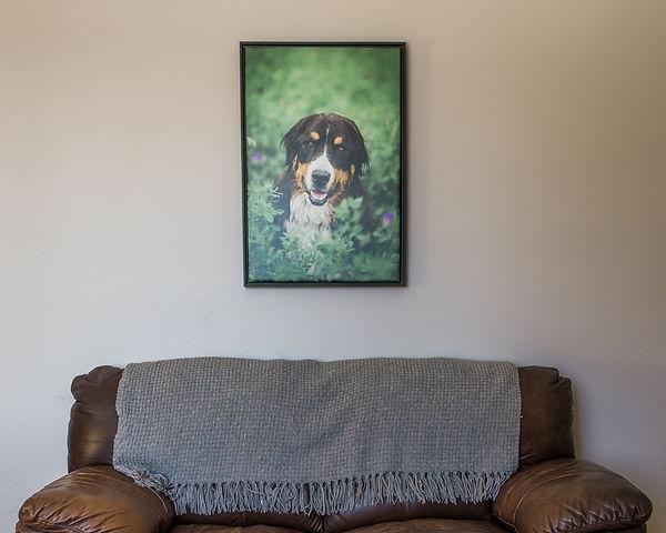 Tiffany Wilson Pet Photography
