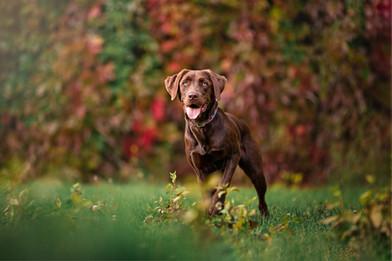 Tiffany Wilson Pet Photography Emmy Lou-