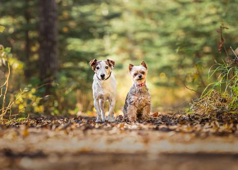Tiffany Wilson Pet Photography Mia & Ril