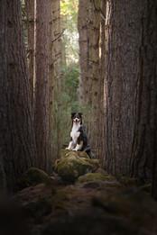 Tiffany Wilson Pet Photography Style Lab