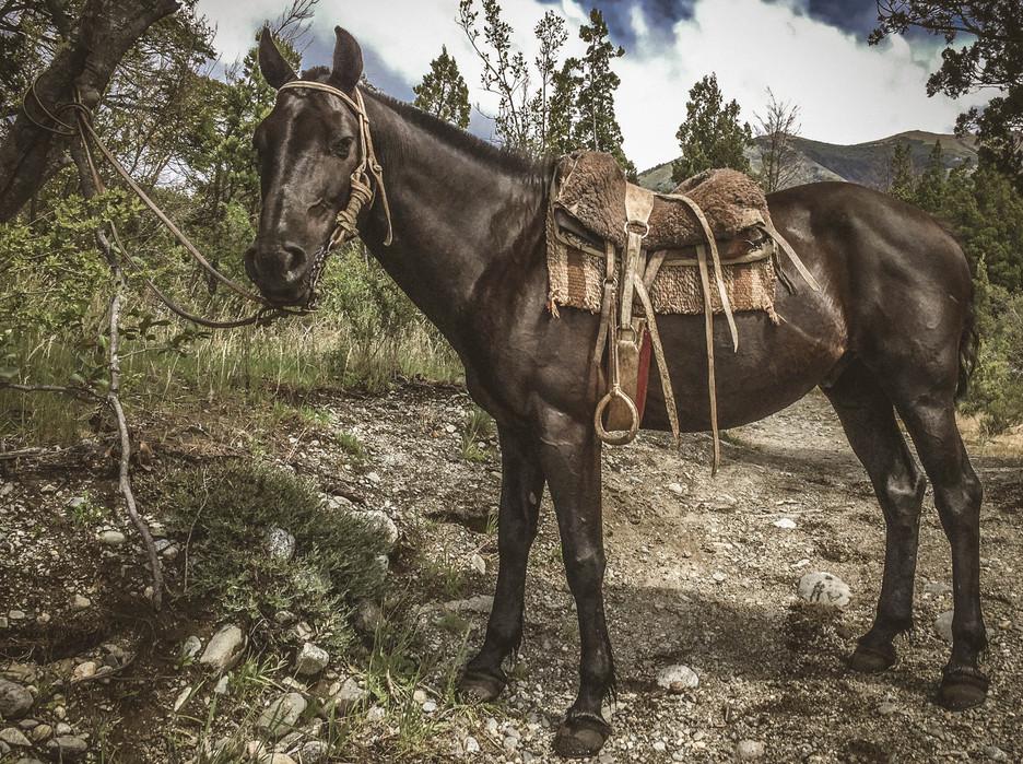 Tack Talk: Saddles