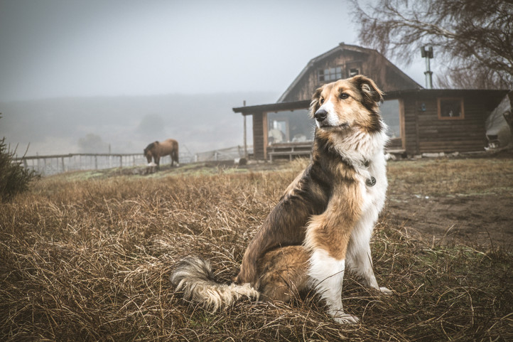 Dog Blog: Training for the Journey Ahead