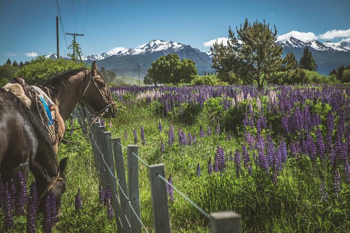 Patagone: Trevelin