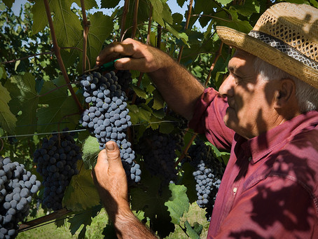 Summer Reds You Need to Know: Dolcetto