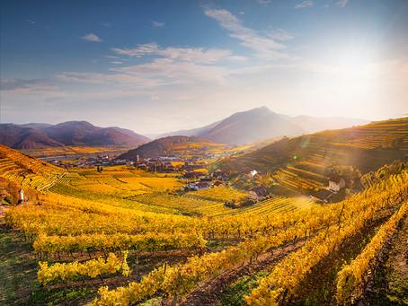 Austria: Grüner Veltliner