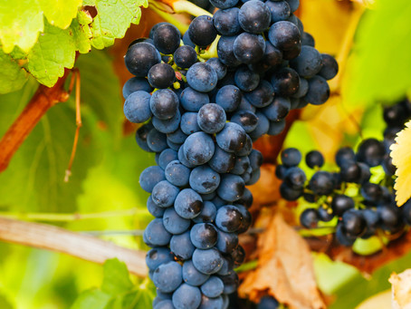 Summer Reds You Need to Know: Pinot Noir