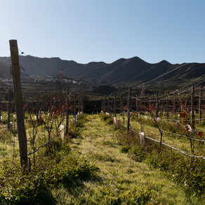 Wine Boot Camp Vol. 1: The Canary Islands