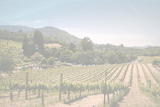 Vineyard_edited.jpg