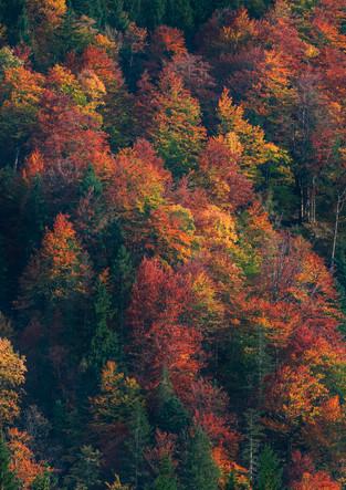Wald mit buntem Herbstlaub am Weitsee