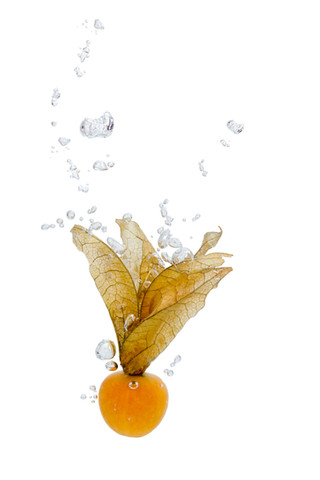 Physalis in the water with air bubbles