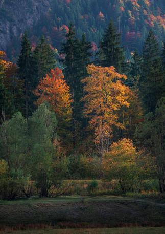 Bäume mit Herbstlaub am Weitsee