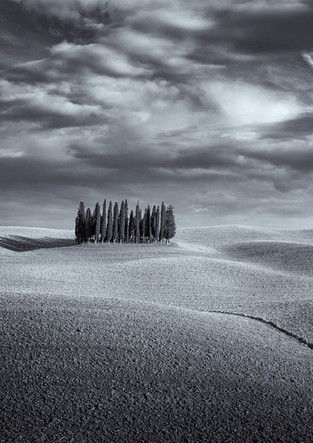 Cypress forest of San Quirco d'Orcia