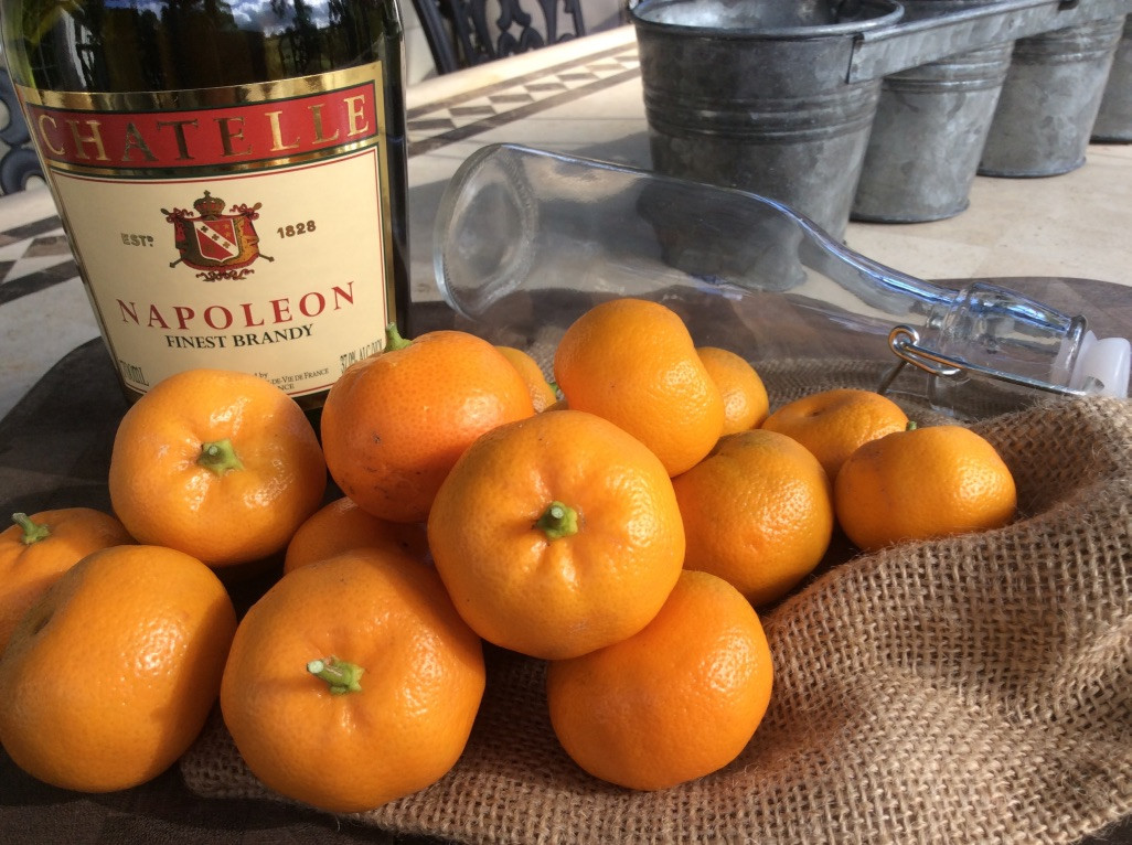 Make your own cumquat brandy!