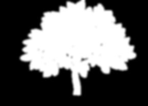Startseite_Baum_02_Baum.png