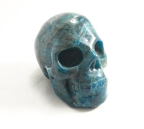 Apatite Skull