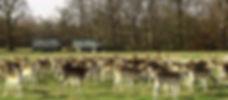 T8-2-Deer Park at Attingham-National Tru