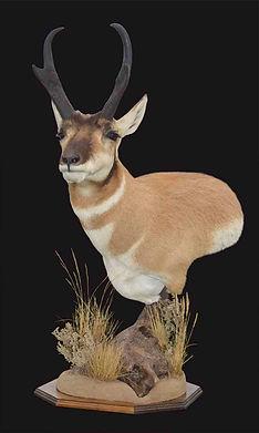 Antelope_Ped.jpg