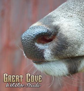 Nose-Detail.jpg