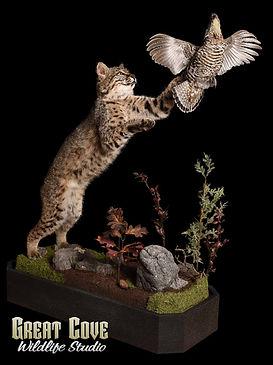 Bobcat_Grouse.jpg