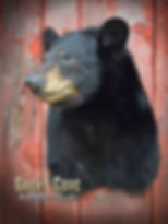 Bear_Shoulder.jpg