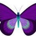 dwavebutterfly.png