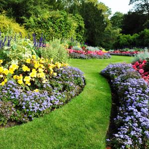 Plants that attract beautiful wildlife