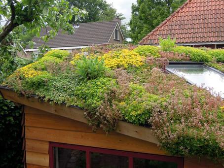 Subsidie voor groene Helmondse daken
