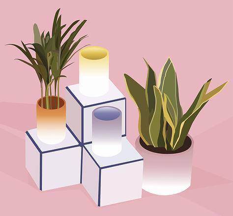 box plant-01.jpg