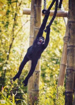 Wilder Mann - Tierpark Hellabrunn - ©zoo-o-grafie - AWa