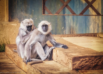 Im Tempel - © zoo-o-grafie / AWa - Erlebniszoo Hannover