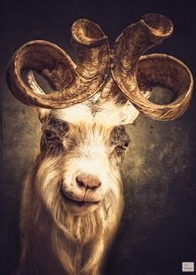 Herr Monty - Tierpark Hellabrunn - ©zoo-o-grafie - AWa