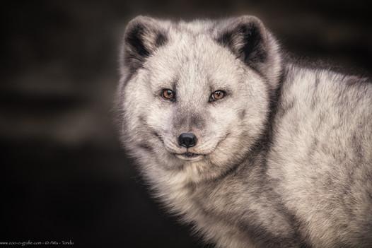 Joaquin - Tierpark Hellabrunn - ©zoo-o-grafie - AWa