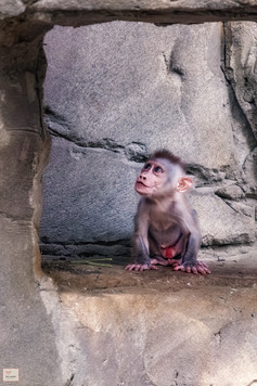 Mami?!? - Tierpark Hellabrunn - ©zoo-o-grafie - AWa
