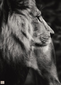 Benny - Tierpark Hellabrunn - ©zoo-o-grafie - AWa
