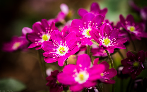 Pink - © zoo-o-grafie - AWa