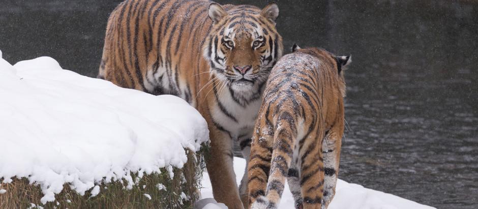 Vom Foto zum Bild oder Zoo-o-grafie am praktischen Beispiel