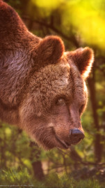 Remember Lady Olga - Tierpark Hellabrunn - ©zoo-o-grafie - AWa