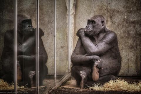 Betrachtungen - Tierpark Hellabrunn - ©zoo-o-grafie - AWa