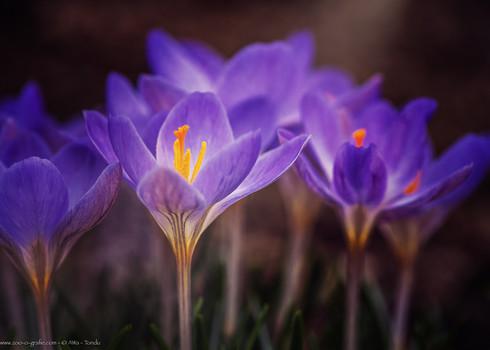 Leuchtblüten - Botanischer Garten München - @zoo-o-grafie - AWa