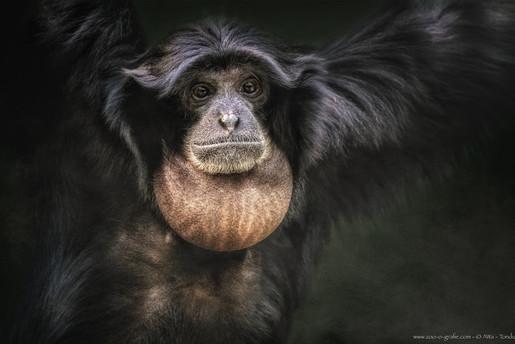 Youki - Tierpark Hellabrunn - ©zoo-o-grafie - AWa