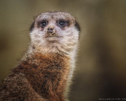Ausguck - Tierpark Hellabrunn - ©zoo-o-grafie - AWa