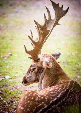 Männlich - Tierpark Hellabrunn - ©zoo-o-grafie - AWa