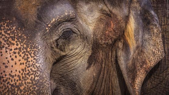 Remember the Queen - Tierpark Hellabrunn - ©zoo-o-grafie - AWa